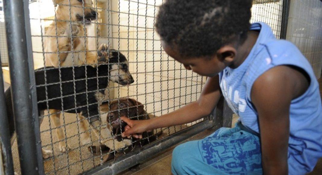 Lei que determina proibição de sacrifício de animais por zoonoses é publicada